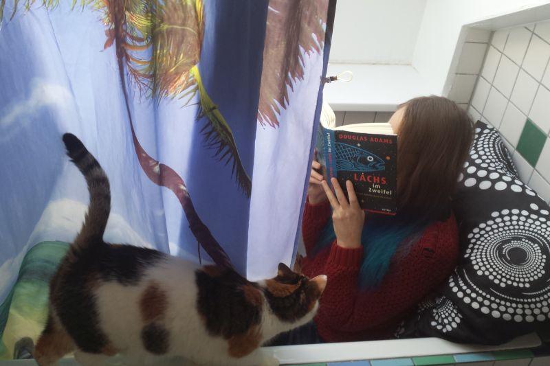 Badewanne lesen Katzen