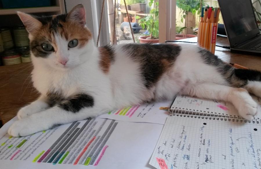 Katze lernen Semester Student